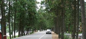 Coeur d'Alene Appoints Dike Road Trees Committee